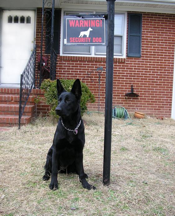 House Dog Intruder Deterrent